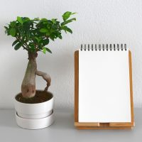 Evergreen plant and notebook